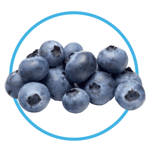 blueberries are a healthy snack for dogs