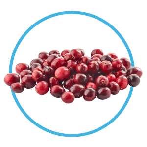 cranberries are a great snack for puppies