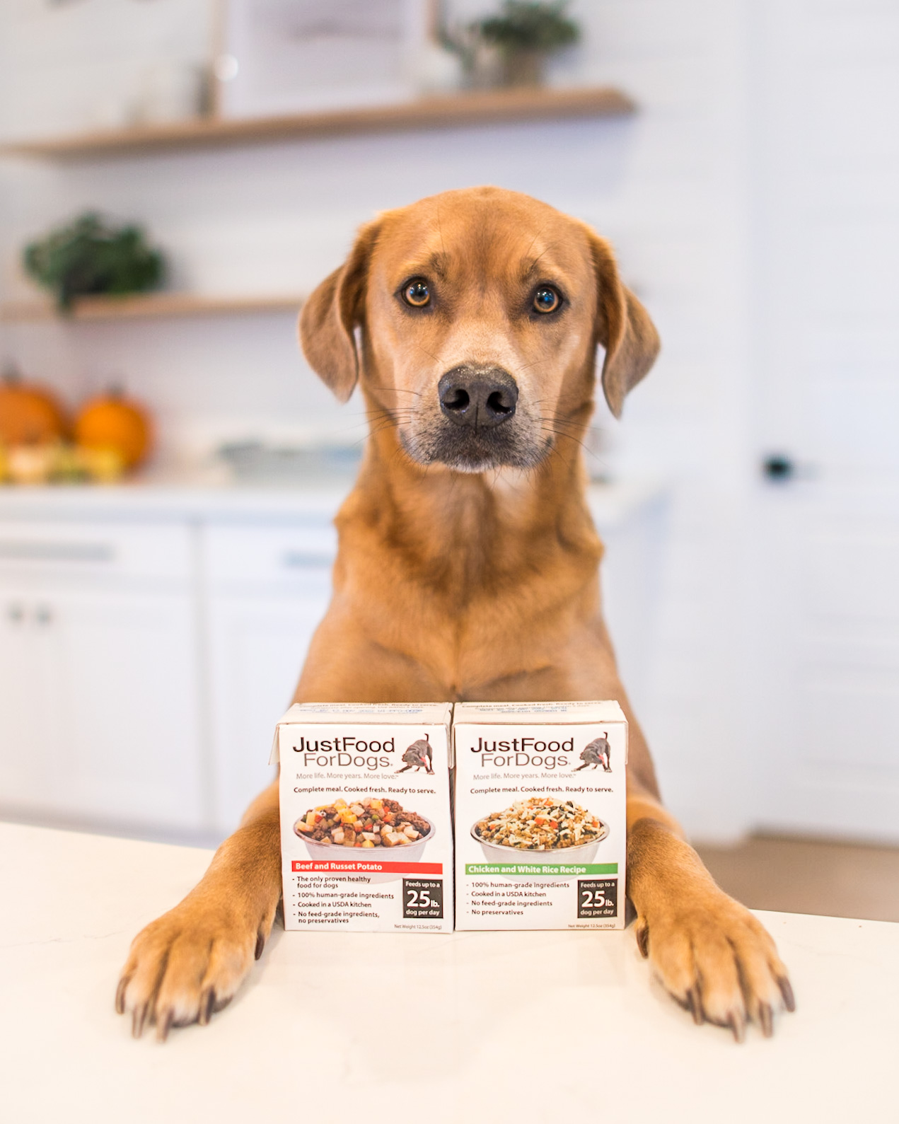 henry and finn for justfoodfordogs