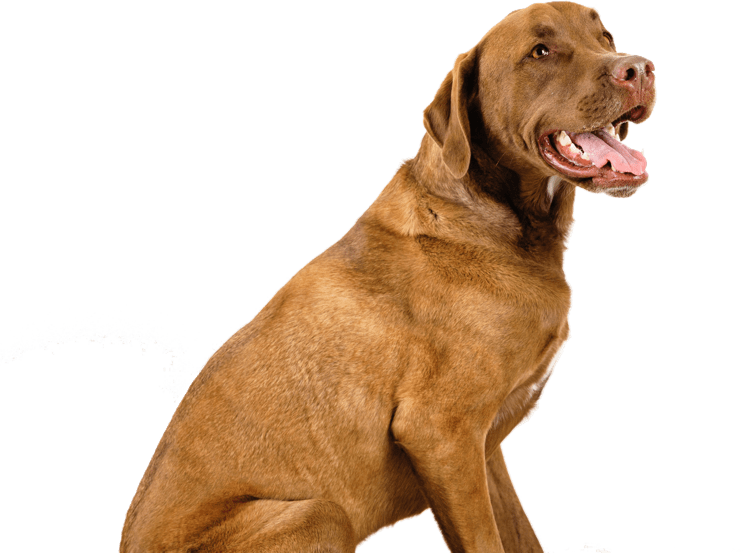 Feeding calculator for dogs and puppies